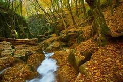 Córrego de fluxo do outono imagens de stock