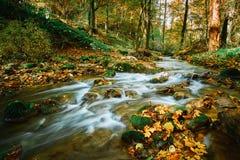 Córrego de fluxo do outono fotos de stock