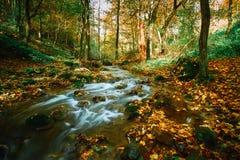 Córrego de fluxo do outono fotografia de stock royalty free