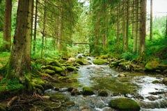 Córrego de fluxo na floresta imagem de stock royalty free