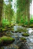 Córrego de fluxo na floresta imagens de stock