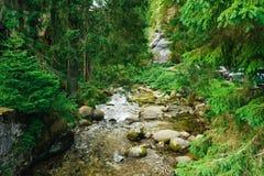Córrego de fluxo na floresta imagens de stock royalty free