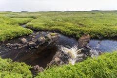 Córrego de fluxo, prados auxiliares de L'Anse, Terra Nova fotografia de stock