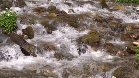 Córrego de fluxo rápido da montanha video estoque