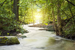 Córrego de Forrest Fotografia de Stock Royalty Free