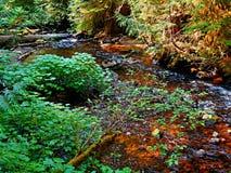 Córrego de gorgolejamento Fotos de Stock