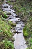 Córrego de madeira Fotos de Stock