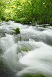 Córrego de Oirase Imagem de Stock