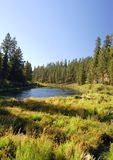 Córrego de Oregon Fotografia de Stock