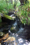 Córrego de Taiga Fotografia de Stock Royalty Free