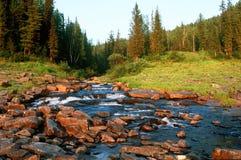 Córrego de Taiga  Imagens de Stock
