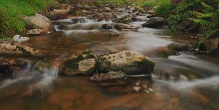 Córrego delicado foto de stock