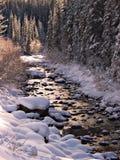 Córrego do inverno fotos de stock royalty free