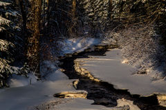 Córrego do inverno Fotos de Stock