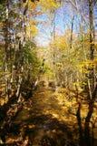 Córrego do outono Fotos de Stock