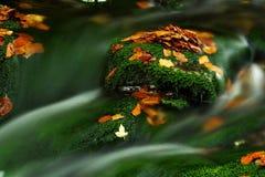 Córrego do outono em montanhas gigantes Fotos de Stock Royalty Free