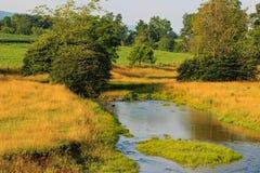 Córrego do país Foto de Stock