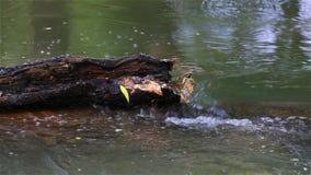 Córrego do rio video estoque