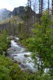 Córrego do rio da montanha em Vysoke Tatry, Eslováquia fotos de stock royalty free