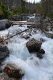 Córrego do rio da montanha em Vysoke Tatry, Eslováquia fotografia de stock royalty free