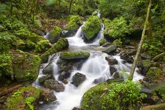 Córrego do rio do EL Yunque Fotografia de Stock Royalty Free