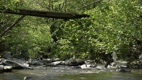 Córrego do rio sob a ponte de madeira e na natureza video estoque