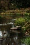 Córrego do verão Foto de Stock Royalty Free