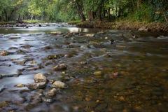 Córrego do verão imagem de stock