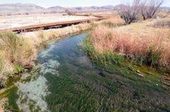 Córrego dos prados da cinza Imagem de Stock Royalty Free