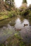 Córrego e animais selvagens Imagens de Stock Royalty Free