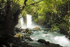 Córrego e cachoeira Fotos de Stock Royalty Free