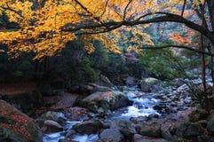 Córrego e floresta dourada da queda imagens de stock