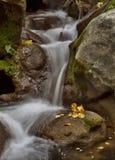 Córrego e folha amarela Fotografia de Stock Royalty Free