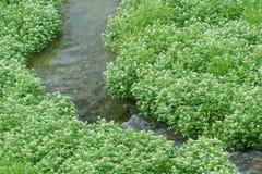 Córrego e plantas Fotografia de Stock Royalty Free