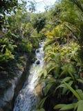 Córrego em um bioma 2 Fotos de Stock Royalty Free