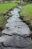 Córrego em uma floresta Fotos de Stock