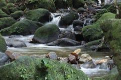 Córrego em uma selva Fotografia de Stock