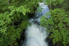 Córrego fresco Imagem de Stock Royalty Free