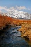 Córrego frio da montanha Foto de Stock