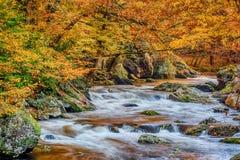 Córrego fumarento da montanha com Autumn Leaves fotografia de stock royalty free