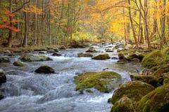 Córrego fumarento da montanha do outono