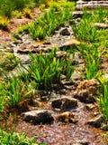 Córrego gramíneo pequeno em México fotos de stock