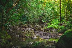 Córrego havaiano na selva de Oahu imagem de stock