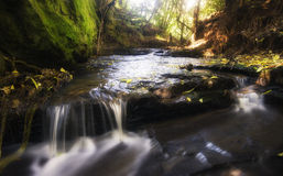 Córrego ideal Foto de Stock Royalty Free