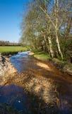 Córrego inglês na mola Foto de Stock
