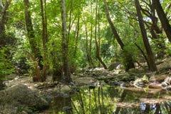 Córrego Kziv da floresta Fotos de Stock Royalty Free