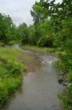 Córrego Meandering Fotografia de Stock
