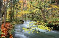 Córrego misterioso de Oirase na floresta do outono Foto de Stock