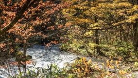 Córrego misterioso de Oirase que corre através da floresta do outono dentro a Imagens de Stock Royalty Free