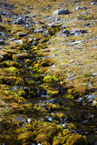 Córrego Mossy foto de stock royalty free